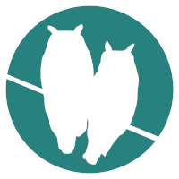 Morning Owls (white silhouette of two owls on a turquoise background)